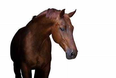 Equine Medicine Sports Referral Hospital Horse Vets