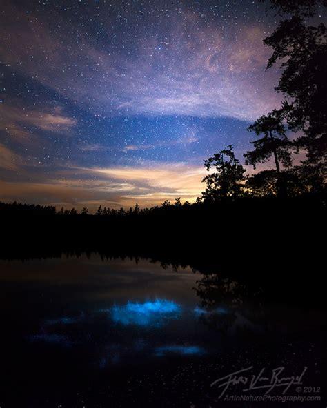 scintillating night san juan islands wa art  nature