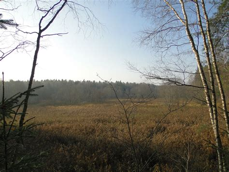 Tīreļu līdzenums fotogrāfijās: Meži un pļavas pie Slocenes augšpus Valguma ezera - Novembris 2011