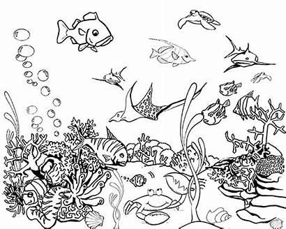 Fish Coloring Tropical Pages Tank Aquarium Drawing