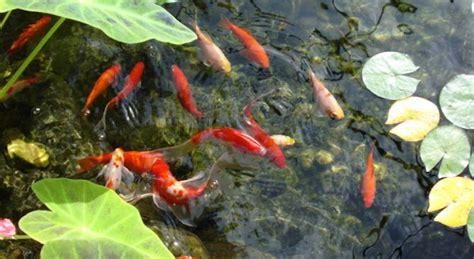 Garden Goldfish raised timber pond volume calculator