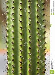 Cactus Texture Stock Photo  Image Of Growing  Middle
