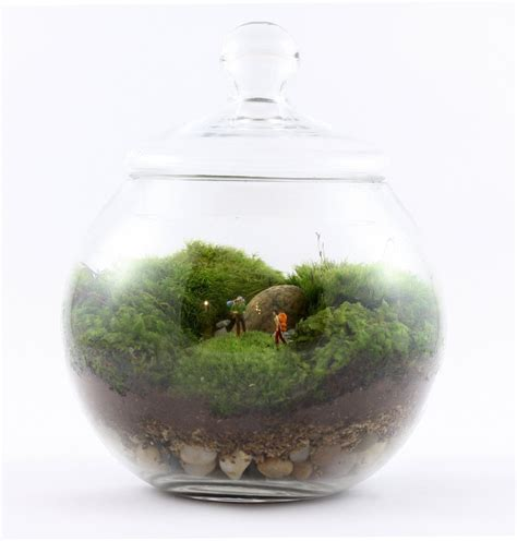 closed terrarium me my food my creativity diy terrariums potted succulents