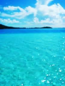 Tahiti Bora Bora Swimming