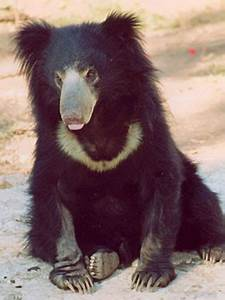 Bears, Of, The, World