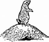 Prairie Dog Coloring Animals Burrow sketch template