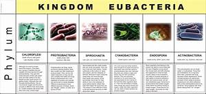 Kingdom Eubacteria | ETC Montessori