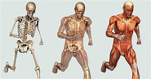 Optimal Bone And Muscle Formation  Welcome To Bones And Muscles Info