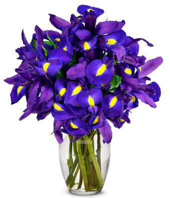 Stunning Blue Iris  10 Stems At From You Flowers