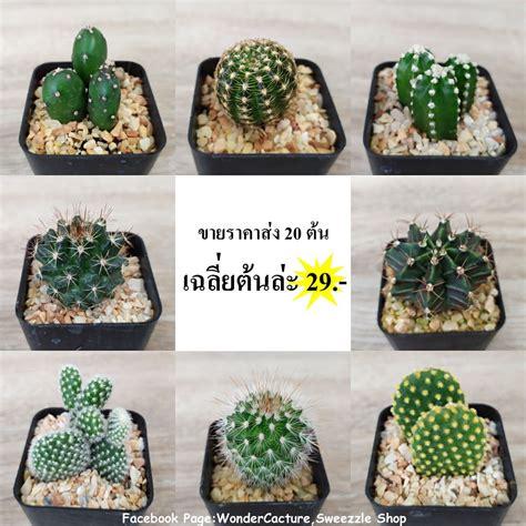 กระบองเพชร แคคตัส (Cactus) ขายส่ง 20 ต้น ราคาถูก เฉลี่ยต้น ...