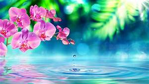 Pink Orchid Flowers Green Petals Drops Water Waves Desktop Hd Wallpaper For Pc Tablet And Mobile