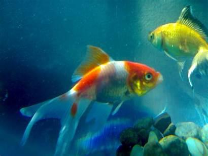 Fishes Sea Fish Wallpapers Desktop Water Animals