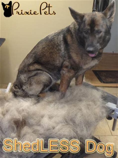 Dogs That Shed Less Hair by How To Make Your Shed Less De Fur Your Home Guide