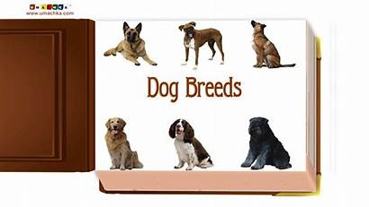 Dog Learning Early Breeds Educational Children English