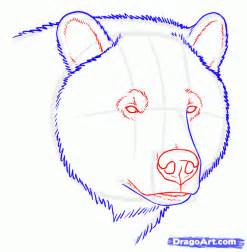 How to Draw a Grizzly Bear Face