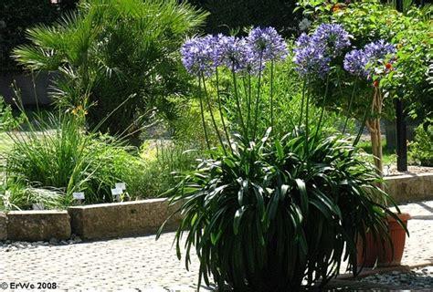 arbuste en pot plein soleil quel arbuste mettre en plein soleil