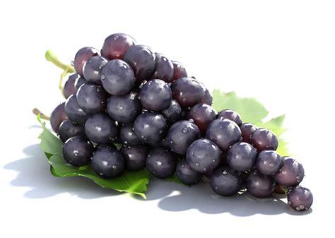 le grappe de raisin ces quot alicaments quot qui ressemblent 201 trangement aux du corps qu ils apaisent