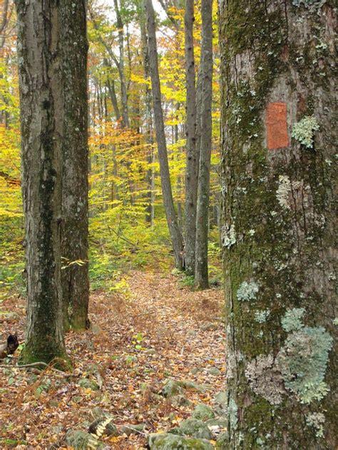 รูปภาพฟรี: ไม้ ต้น ใบ ธรรมชาติ ภูมิทัศน์ เปลือก ...