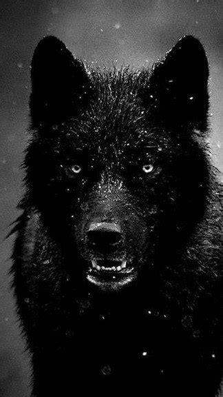 Black Wolf Quotes Wallpaper by Black Wolf Iphone 6 Wallpaper