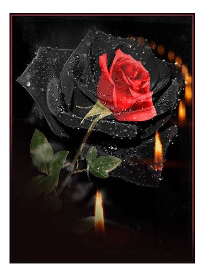 Gifs Flores Rosas Roses Rose Kostenlos Rosa