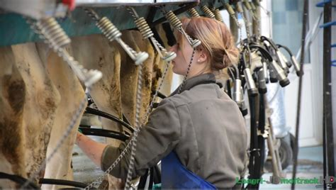 salle de traite 2x12 450 vaches laiti 232 res traites par