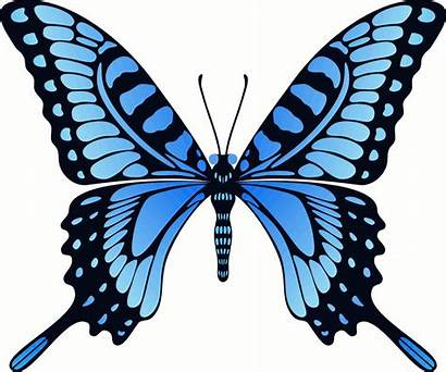 Butterfly Clip Animated Flying Background Without Wings