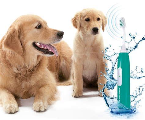 weltweit erste  ultraschall zahnbuerste fuer hunde nw