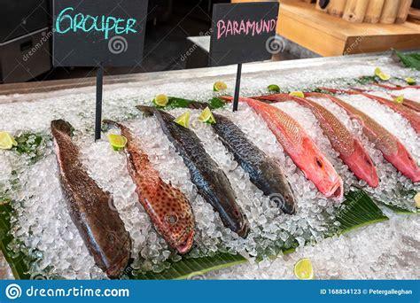 barramundi grouper ice market