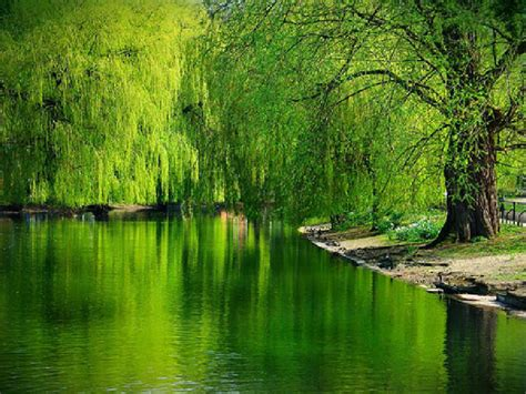 Beautiful Nature Background by Beautiful Lakes Wallpapers