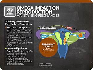 New Quick Guide To Omega Impact On Reproduction