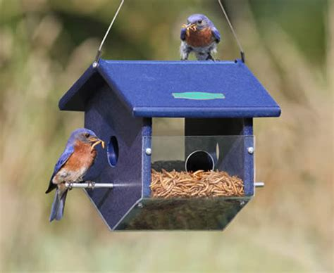 easy view mealworm feeder