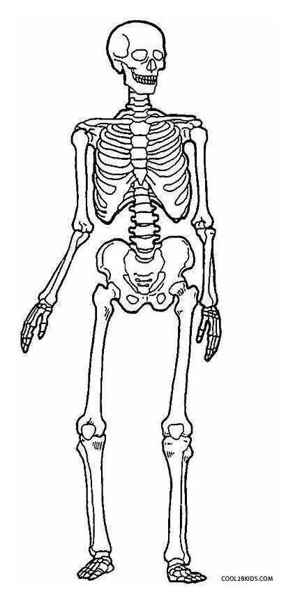 Skeleton Coloring Human Pages Drawing Skeletal System