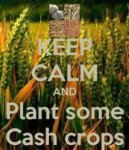 17 Best images about Cash crops on Pinterest | Vineyard ...