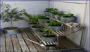 Ab Wann Erdbeeren Pflanzen : kr uter balkon wann pflanzen hauptdesign ~ Eleganceandgraceweddings.com Haus und Dekorationen