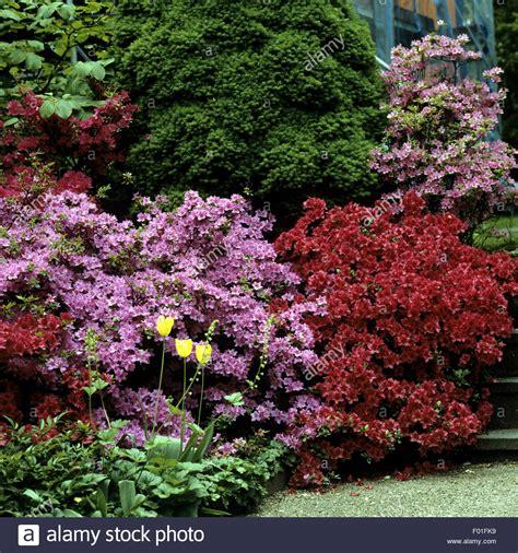 Garten Kaufen Heidelberg by Azaleen Rhododendren Parkanlage Botanischen Garten