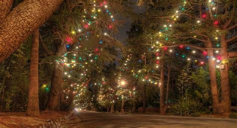 christmas lights lane los angeles christmas lights los