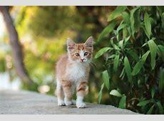 Obstacles in Diagnosing Feline Osteoarthritis