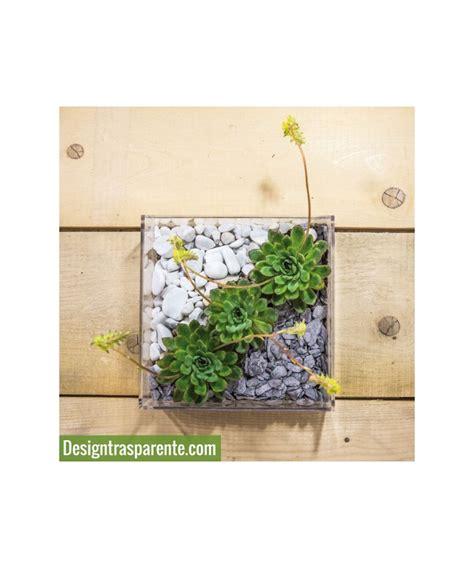 vaso piante grasse plexiglass idee originali vaso composizione piante