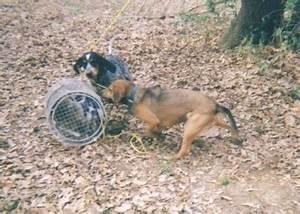 List of Hunting Dog Breeds
