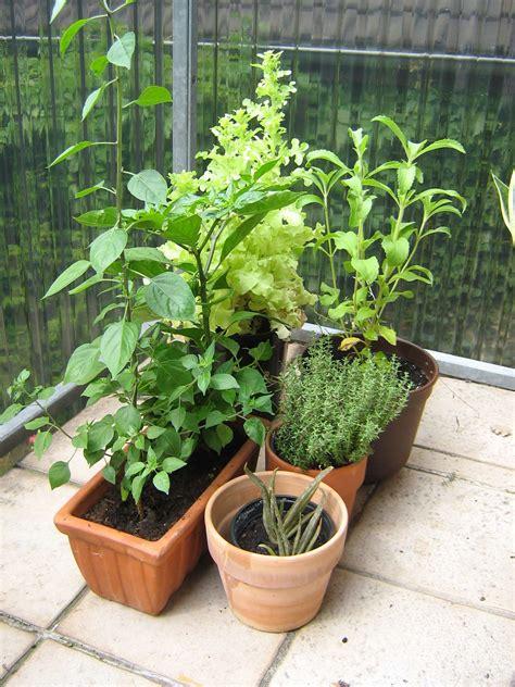 kakteenerde selber mischen blumenerde selber mischen tipps f r blumenerde und pflanzerde mein sch ner garten bonsaierde