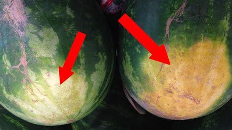 pick  perfect watermelon youtube