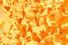 Golden Dreams And Pastel Shades Come To by Leaf Pattern Stock Photos 303 298 Images