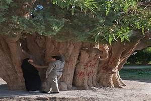 What Is The Oldest Tree In The World?What Is The Oldest ...
