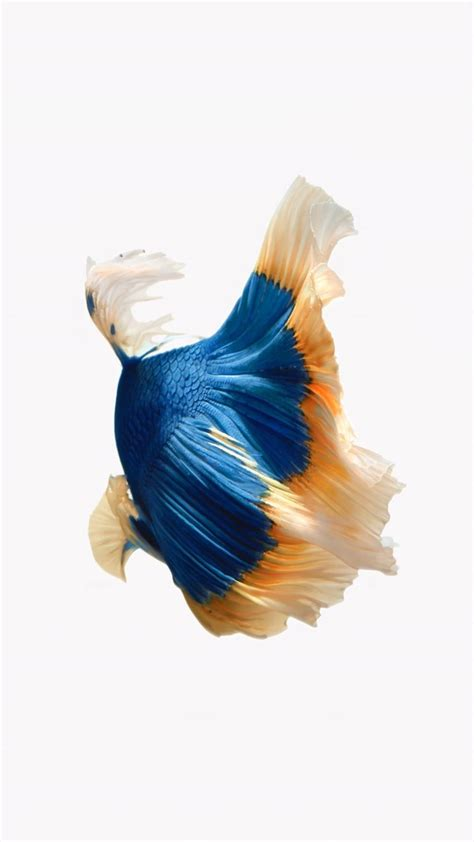 Best Live Wallpapers Iphone 11 by How To Get Apple S Live Fish Wallpapers Back On Your