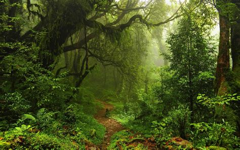 rainforest background   beautiful full hd