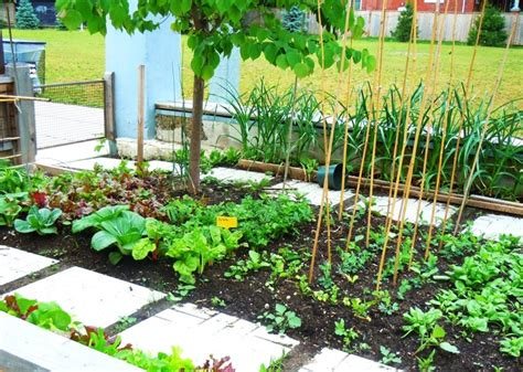Urban Gardening : Are Urban Gardening Is A Great Choice For You?