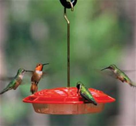 how to keep bees away from hummingbird feeders tips from