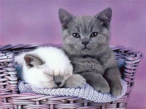 Cute & Funny Kitten  New Picturesimages  Funny And Cute