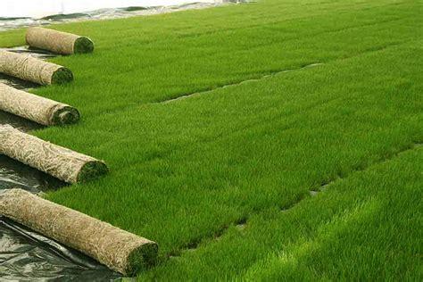 prezzi tappeti erbosi il tappeto erboso in placche garden4us