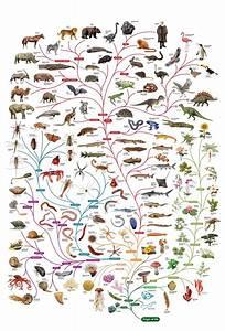 Tree Enlightenment  Darwin For You  Y7